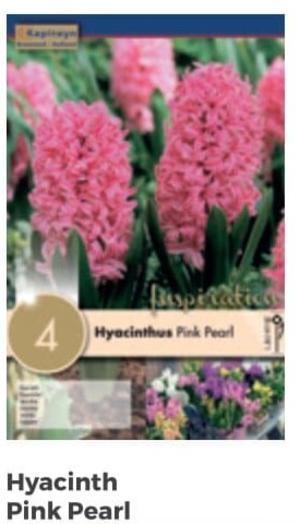 Bulbi di Giacinto Pink Pearl confezione da 4 pz