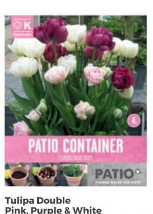 Bulbi di Tulipano Double confezione da 12 pz + Rosa Viola