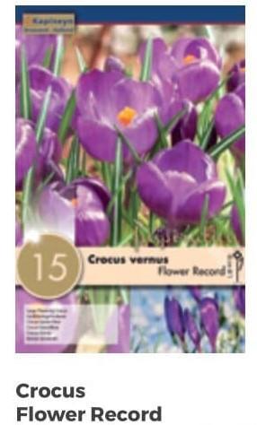 Bulbi di Crocus Flower Record confezione da 15 pz