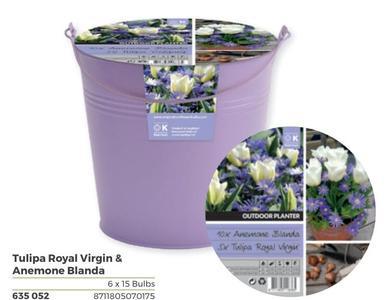 Bulbi di Tulipano + Anemone Blanda confezione da 15 pz