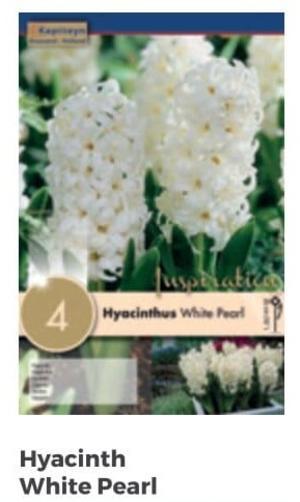 Bulbi di Giacinto White Pearl confezione da 4 pz