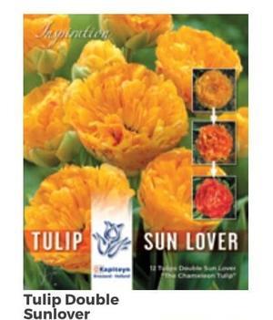 Bulbi di Tulipano Double Sun Lover confezione da 12 pz