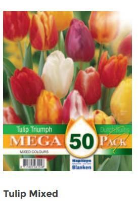 Bulbi di Tulipano Mixed confezione da 50 pz