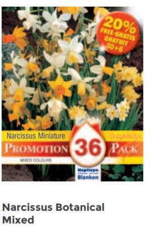 Bulbi di Narciso Mixed confezione da 50 pz