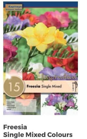 Bulbi di Freesia Single Mixed Colours confezione da 15 pz
