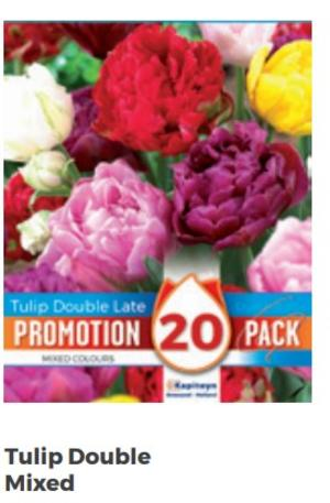 Bulbi di Tulipano Double Mixed Colours confezione da 20 pz