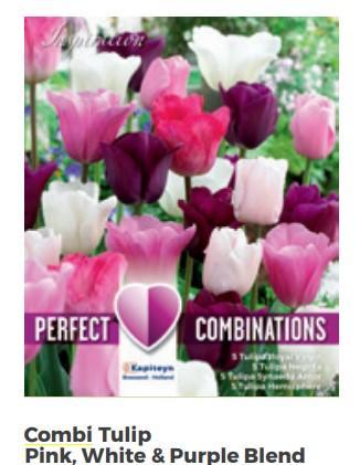 Bulbi di Tulipano Combi Pink, White & Purple confezione da 20 pz