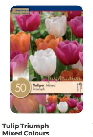Bulbi di Tulipano Triumph Mixed Colours confezione da 50 pz