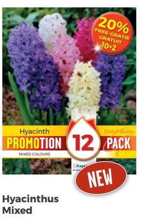 Bulbi di Hyacinthus Mixed  confezione da 12 pz
