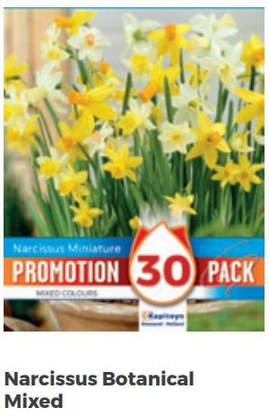 Bulbi Autunnali di Narcissus Botanical Mixed confezione da 30 pz