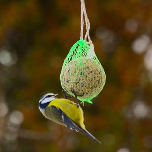 Palla di Grasso da 500 gr per Uccelli Selvatici
