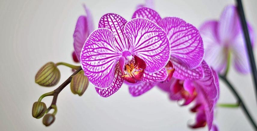 Peonia, Frutto della Passione e Orchidea