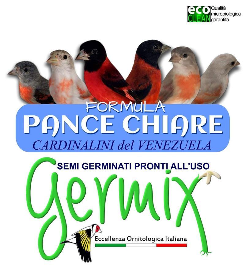 Germix Cardinalini Pance Chiare