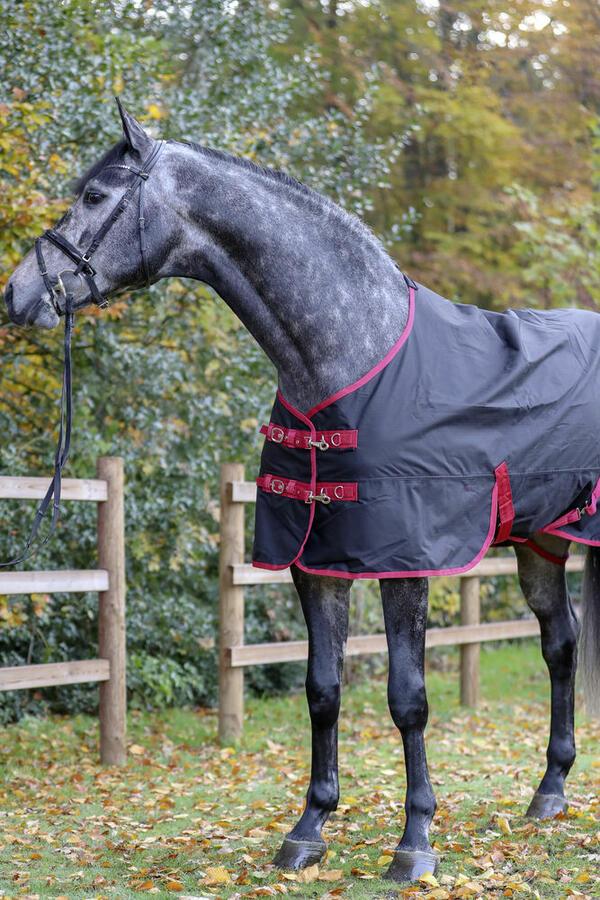 RugBe Zero.1 145 cm coperta da cavallo outdoor perfetta per tutto l'anno