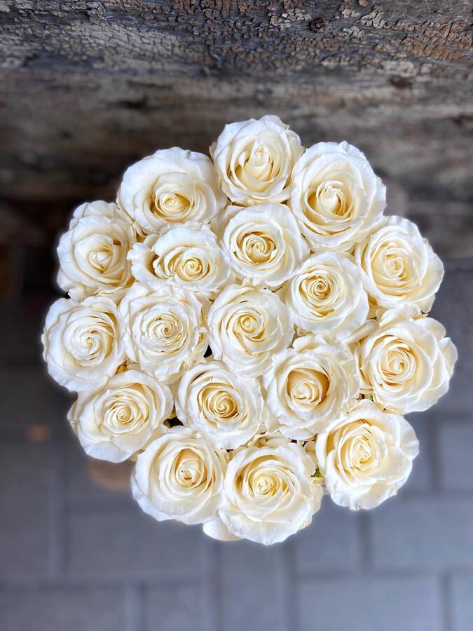 FLOWER BOX T18 Rossana Collection AVORIO