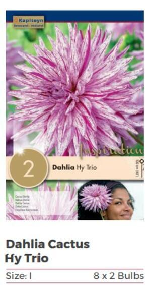 Bulbi di Dahlia Hy Trio confezione da 1 pz