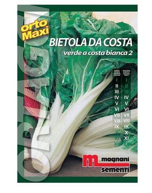 Sementi Bietola da Costa Verde a Costa Bianca 2