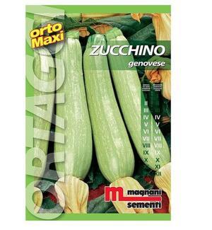 Sementi di Zucchino Genovese