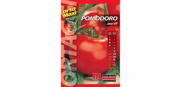 Sementi di Pomodoro Ace