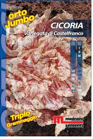 Sementi di Cicoria Variegata di Castelfranco Orto Jumbo