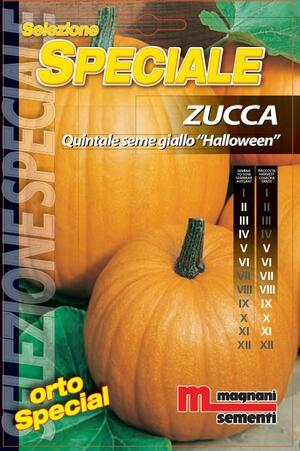 Sementi di Zucca Halloween