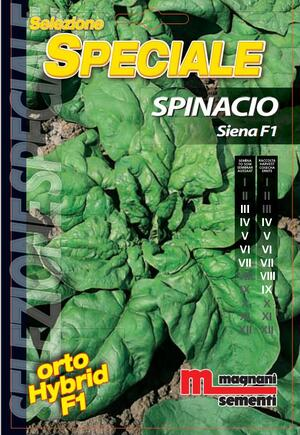 Sementi di Spinacio Siena