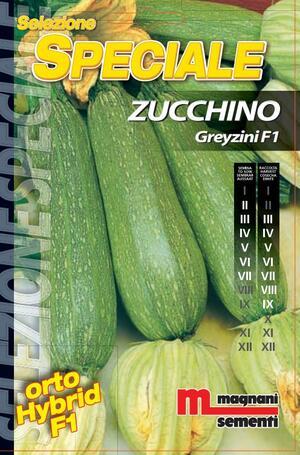Sementi di Zucchino Greyzini