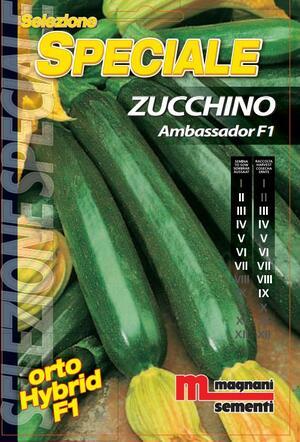 Sementi di Zucchino Ambassador