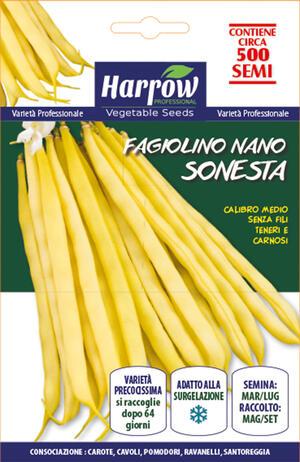 Semi di Fagiolino Nano Sonesta 500-1000 semi