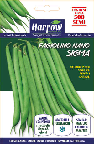 Semi di Fagiolino Nano Sigma 500-1000 semi