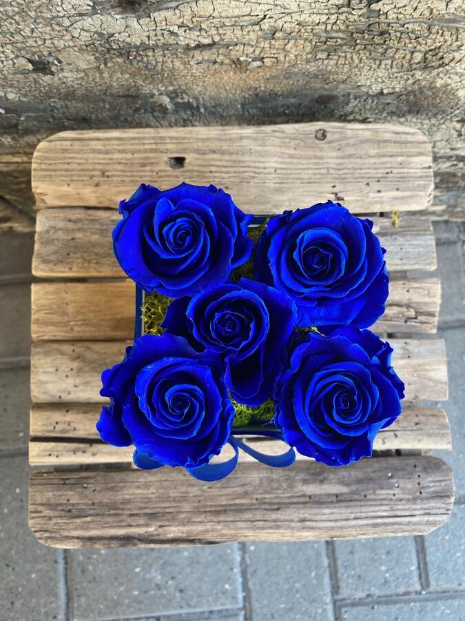 FLOWER BOX Q5 Rossana Collection BLU