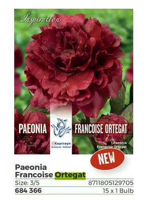 Bulbi di Peonia Francoisa Ortegat confezione da 1 pz