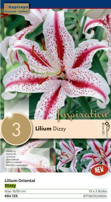 Bulbi di Lilium Dizzy confezione da 3 pz