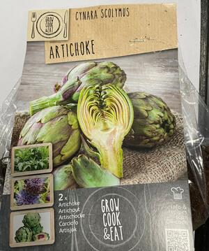 Bulbi di Artichoke confezione 2 pz
