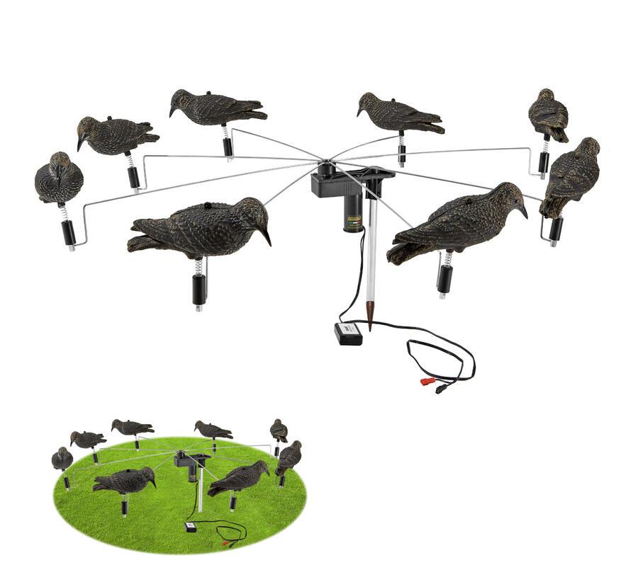 Giostrina con otto storni in pastura con effetto passeggio disponibile anche con allodole, tordi bottaccio, cesene