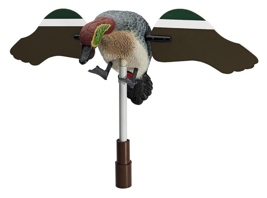 Alzavola maschio ad ali girevoli