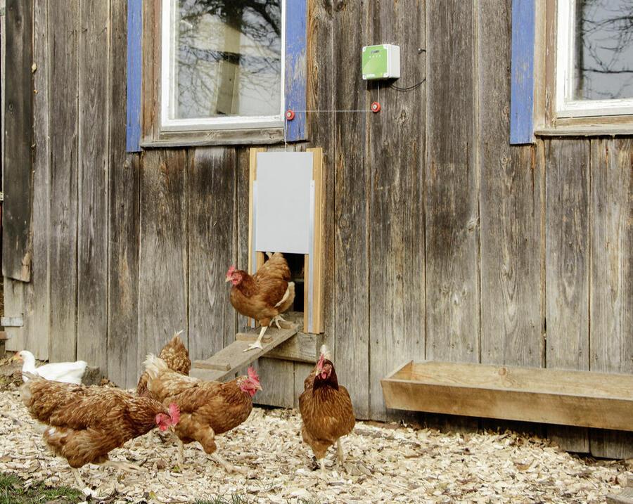 Apriporta automatico per pollai, set completo con porta scorrevole 300x400 mm