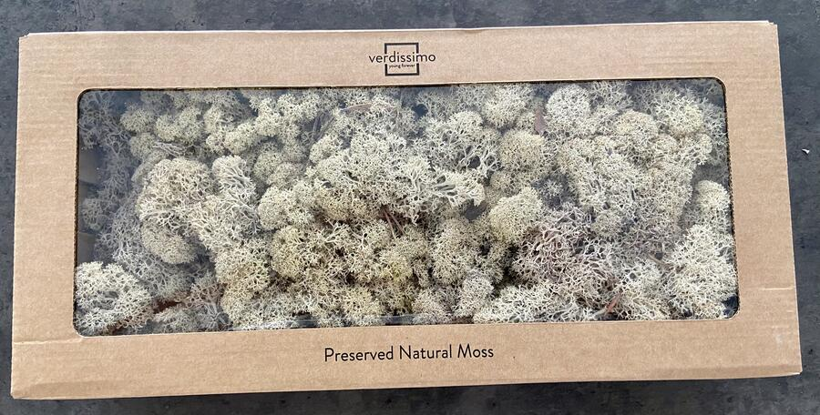 Muschio Lichene stabilizzato Naturale