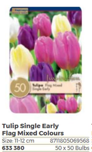 Bulbi Autunnali di Tulipano Single Early confezione da 50 pz KAPITEYN