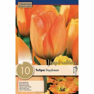 Bulbi Autunnali di Tulipano Daydream confezione da 10 pz KAPITEYN