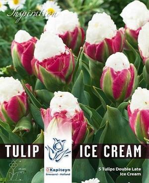 Bulbi Autunnali di Tulipano Double Ice Cream confezione da 5 pz KAPITEYN
