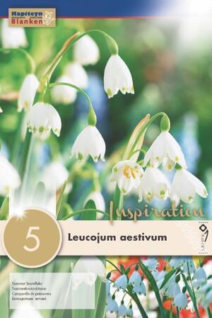 Bulbi Autunnali di Leucojum Aestivum confezione da 5 pz KAPITEYN
