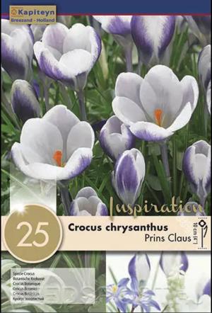 Bulbi Autunnali di Crocus Prins Claus confezione da 25 pz KAPITEYN