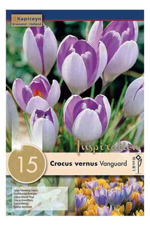 Bulbi Autunnali di Crocus Vanguard confezione da 15 pz KAPITEYN