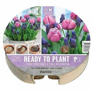 Bulbi Confezione di Tulipani & Muscari Plant-O-Mat KAPITEYN