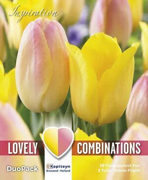 Bulbi Autunnali di Tulipano Combi Triumph Pink & Yellow confezione 15 pz KAPITEYN