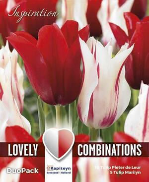 Bulbi Autunnali di Tulipano Combi Lily-Flowered Red & White confezione 15 pz KAPITEYN