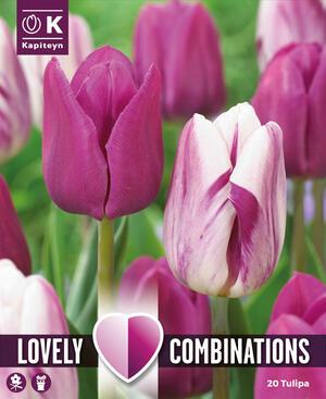 Bulbi Autunnali di Tulipano Combi Purple & White confezione 20 pz KAPITEYN