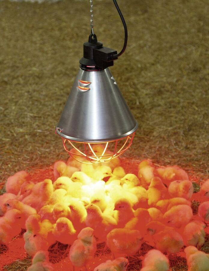 Riflettore per irradiazione del calore infrarossi con 5 m cavo per riscaldamento animali