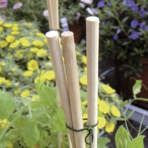 Flower Stick Bastoncini di Bambu' Naturale H50 cm Verdelook